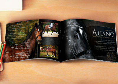 Aliano - Stallion Card