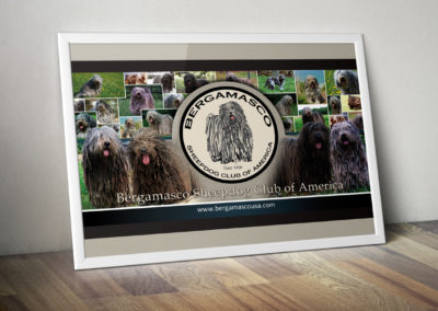 Bergamasco Sheepdog Club of America - Banner